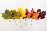 Fototapety autumn leaves