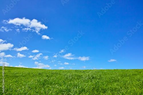 草原 と 青 空