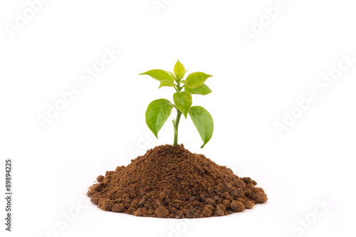Fotobehang Planten Growing young plant isolate on white background.