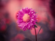 red flower at colorful background