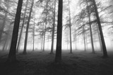 black and white foggy forest