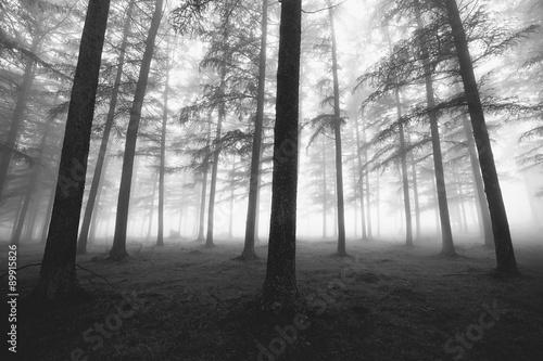 czarno-bialy-mglisty-las