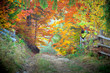 Amazing vibrant Autumn Fall colors in forest landscape and footp