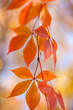 Amazing Colorful Autumn leaves background, vertical background