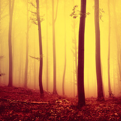 Fire red saturated autumn season foggy forest background. Oversaturated yellow red forest trees background. © robsonphoto