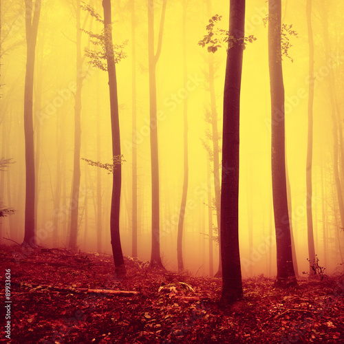 Fire red saturated autumn season foggy forest background. Oversaturated yellow red forest trees background.