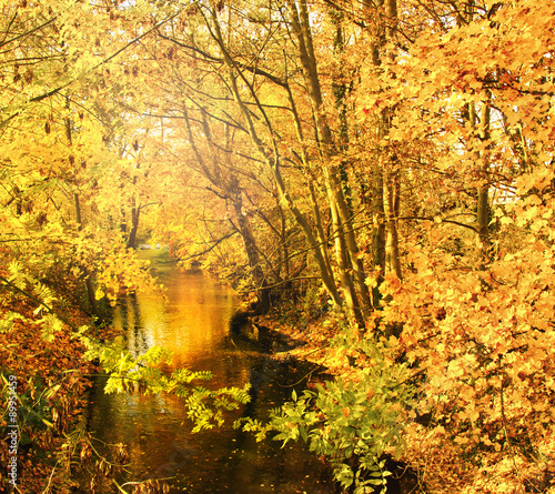 Wonderful day in autumn at a silent, idyllic stream :)