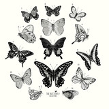 Large Collection of Butterflies, hand drawn set isolated.Vector illustration