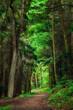 Verträumte Szene im Wald