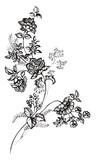 덩굴 사라사 꽃