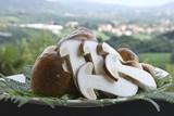 Il piatto di funghi porcini