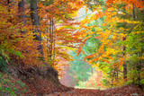 Beautiful Autumn Trees in the colorful forest, yellow, green  an