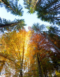 Autumn Leaves and trees with sunbeams - beautiful sesonal