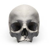 Human skull on white background.