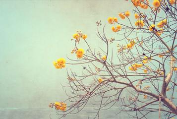 nature of vintage tree flower in summer ,canvas paper art texture © jakkapan