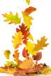 Herbst 64