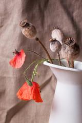 Still-life with poppy