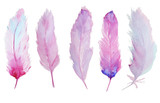 Fototapety Watercolor feathers