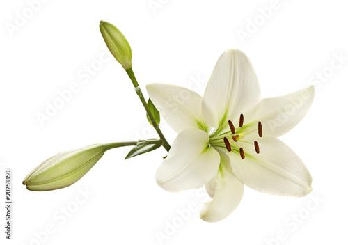 Blanc fleur de lys Poster