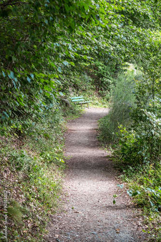 Tuinposter Weg in bos Path in the forest with a bench