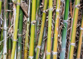 Many Bamboo © kriangx1234