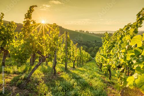 Keuken foto achterwand Geel Sonnenstrahlen beim Sonnenaufgang im Weinberg