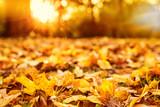 Fototapety schöne Herbststimmung Blätter im goldenen Licht
