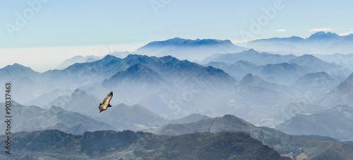 gleitender Geier in den Gipfeln der Picos de Europa in Asturien (Spanien)