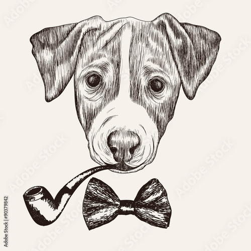 Sketch Jack Russell Terrier Dog with bow tie and tobacco pipe. H - 90379842