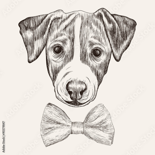 Sketch Jack Russell Terrier Dog with bow tie. Hand drawn illustr - 90379847
