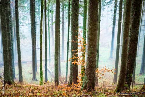 Mysterious mist in the autumn forest © Pavlo Vakhrushev