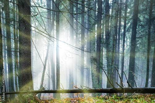 Sun shining through trees © Pavlo Vakhrushev