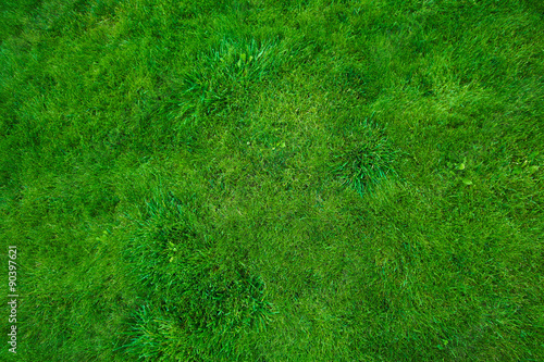 Poster Green lawn.