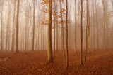 an autumn forest and fog