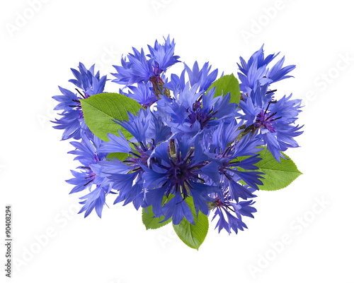 canvas print picture Square blue cornflower composition isolated on white