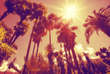 Fototapety Sun shining through tall palm trees. Summer, fashion, travel, vacation, tourism, lifestyle and weather concept.