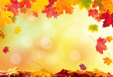 Fototapety autumn leaves background
