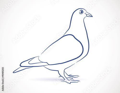 Dessin croquis de pigeon fichier vectoriel libre de droits sur la banque d 39 images fotolia - Dessin pigeon ...