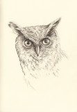 pencil drawing head owl - 90517894