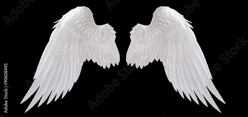 white angel wing isolated - 90608445