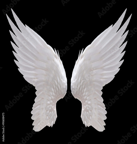 white angel wing isolated Poster
