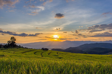 Sunset at Terraced Paddy Field in Mae-Jam Village , Chiang Mai Province , Thailand