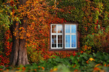 Fototapety autumn leaves with white window