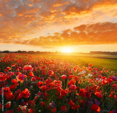 Foto op Canvas Oranje eclat Sunrise poppy field