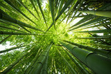 Fototapeta Bamboo - Green bamboo nature backgrounds © enjoynz