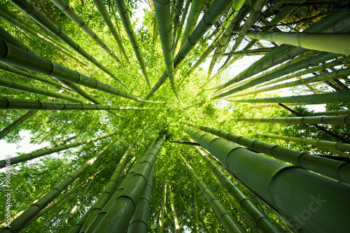 Aluminium Bamboe Green bamboo nature backgrounds