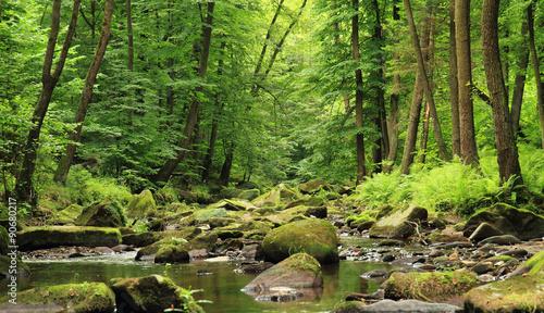 Wald des Flusses im Frühjahr