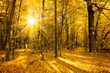 Gold Autumn landscape with sunlight and sunbeams - Beautiful