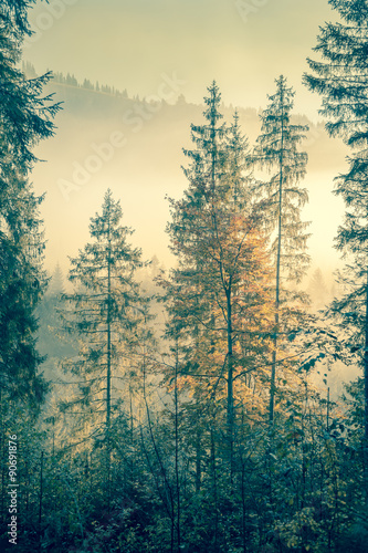 Wild forest in autumnal season time, vintage style toned - 90691876