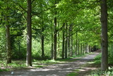 Background of green trees in the forest woods with sunshine spring summer weather
